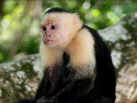 Monkey Tour Manuel Antonio